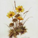 Kunstmaler Kurt Schuldt ,Galerie-Blumenbilder