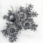 Kunstmaler Kurt Schuldt, -Blumenbilder